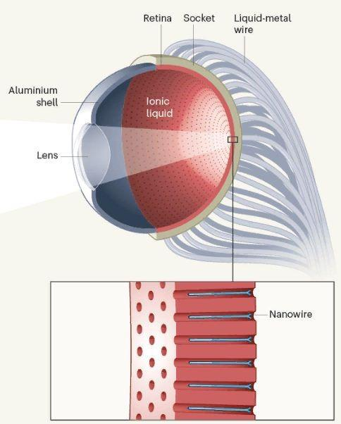 Искусственный глаз с ночным видением – уже не фантастика