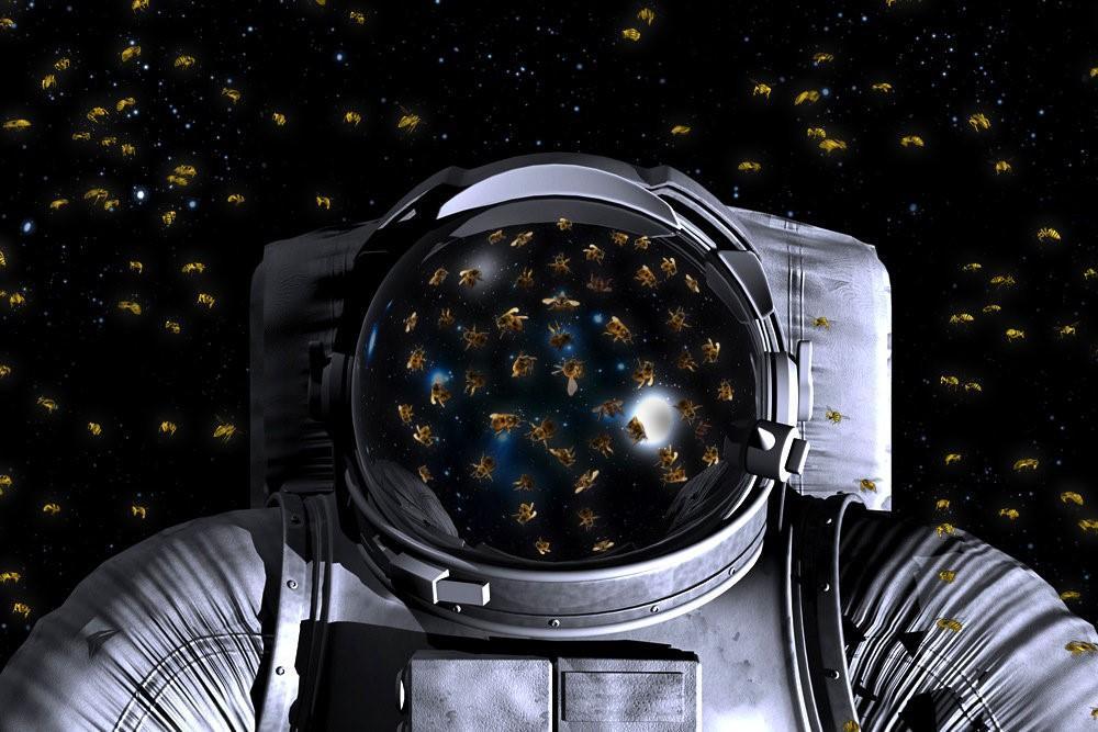 Пчелы-космонавты: как их готовят к полету
